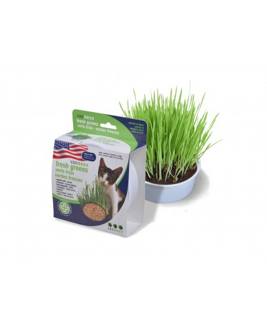 VAN NESS| Herbes fraîches pour chat - avoine