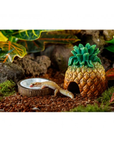 EXO TERRA | Bol à eau - noix de coco