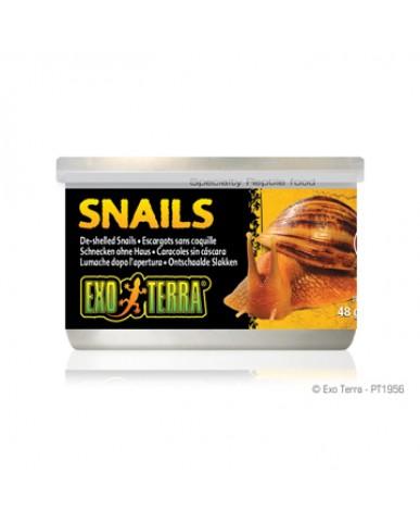 EXO TERRA | Escargots sans coquille pour reptile / 48g