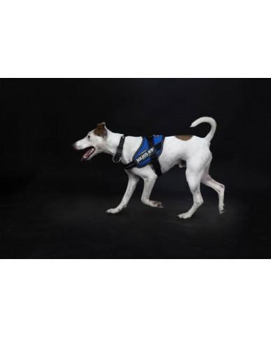 JULIUS K9 | Harnais pour chien