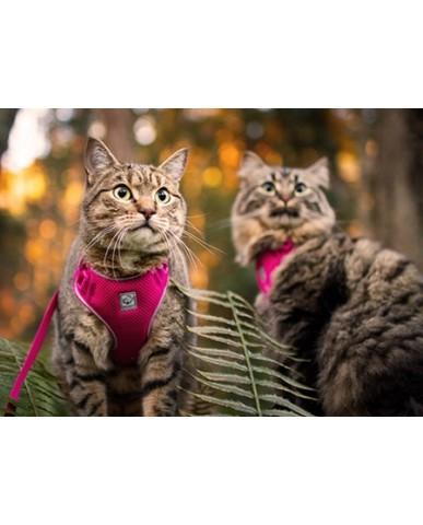 RC PETS | Harnais et laisse pour chat